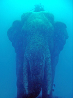 Elephant at Phuket diving park