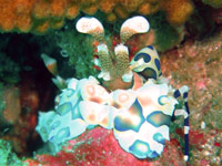 Similan islands - click for dive photo gallery