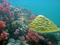 Shark Point's soft colourful corals